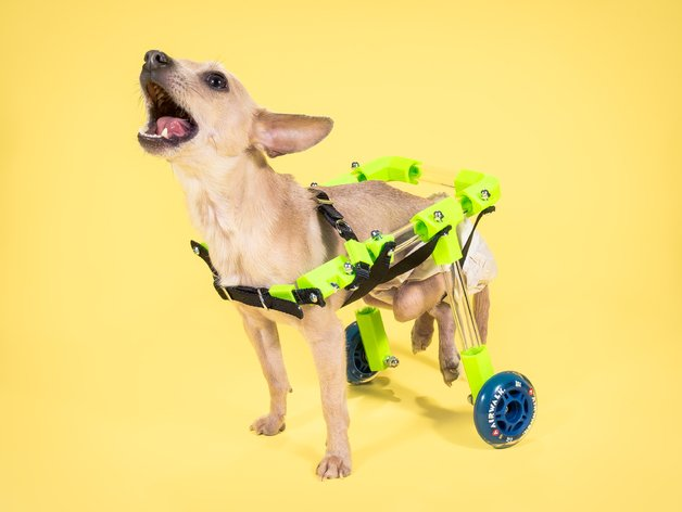 pet-wheelchair